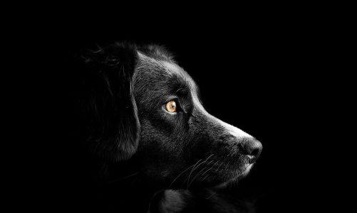 Zorg dat je hond ook licht geeft in het donker